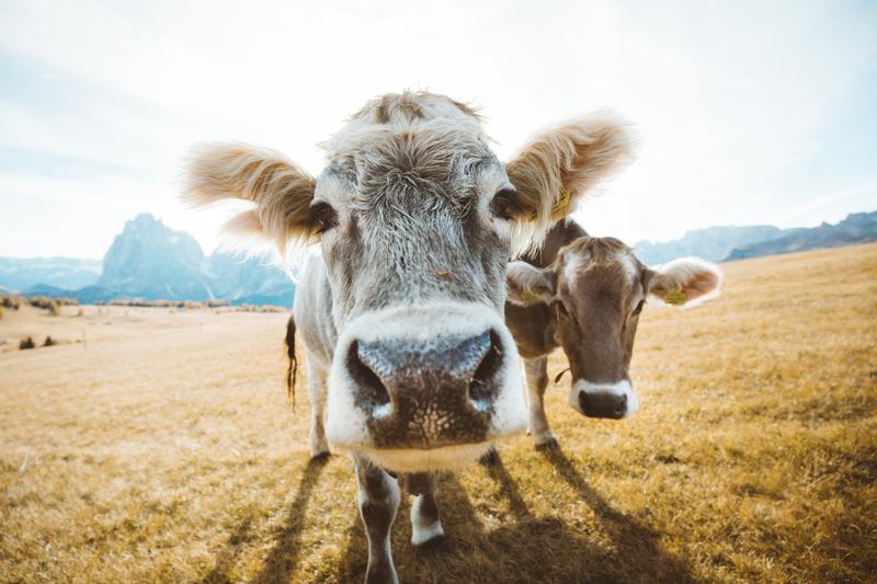 Θέσπιση ετήσιου ανταποδοτικού τέλους σε βοοειδή, χοίρους και αιγοπρόβατα
