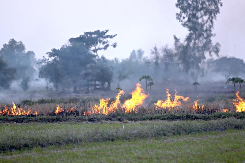 Πυρκαγιές - Επιχορήγηση αγροτικών εκμεταλλεύσεων πυρόπληκτων αγροτών