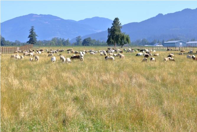 Εξισωτική του 2013 και 2014 - ΥπΑΑΤ: «Μετά από απόφαση του Δικαστηρίου της Ευρωπαϊκής Ένωσης πιο κοντά στη λύση για τους κτηνοτρόφους»