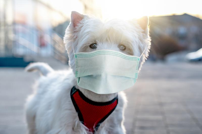 Κορωνοϊός: Υποχρεωτική η μάσκα σε όλες τις υπαίθριες πολιτιστικές εκδηλώσεις - Σε ποιους χώρους και επιχειρήσεις είναι υποχρεωτική η χρήση μάσκας έως 31.8.2020