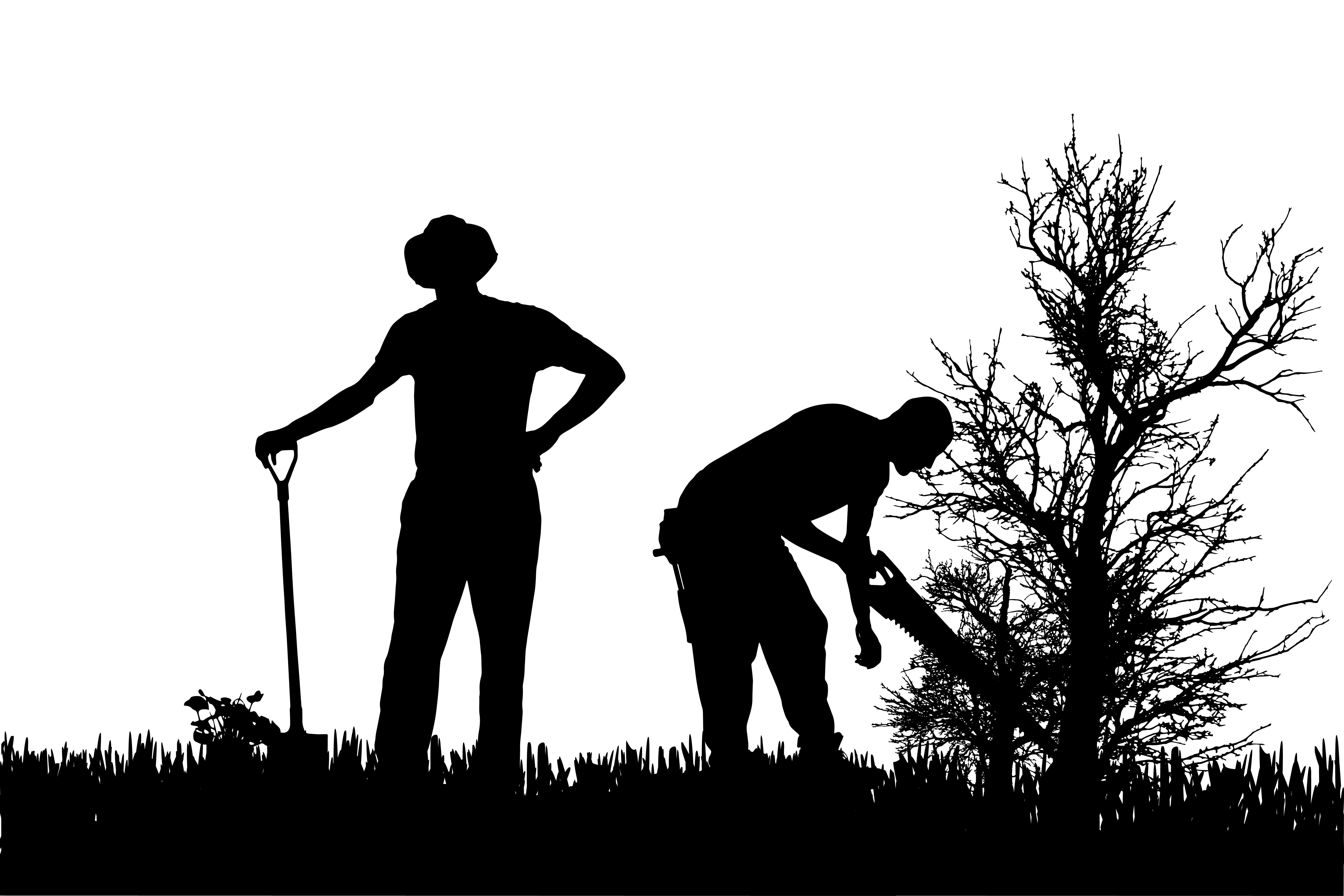 Ασφάλιση εργατών γης - ΥπΑΑΤ: Ισχυρά κίνητρα για να παραμείνουν οι συνταξιούχοι στο χωράφι