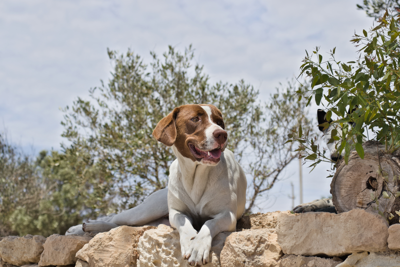 ΥπΑΑΤ: Σε κακούργημα μετατρέπεται το αδίκημα βασανισμού των ζώων