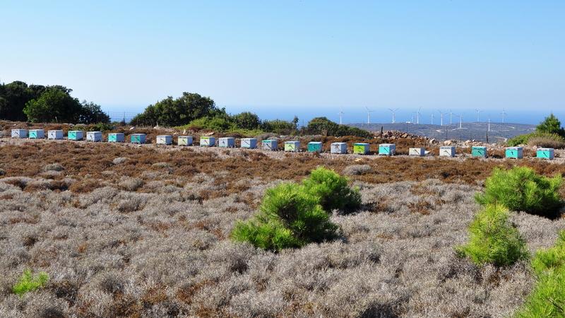 Υπ. Αγροτικής Ανάπτυξης: Στήριξη με 1,8 εκατ. ευρώ της μελισσοκομίας στα μικρά νησιά του Αιγαίου Πελάγους