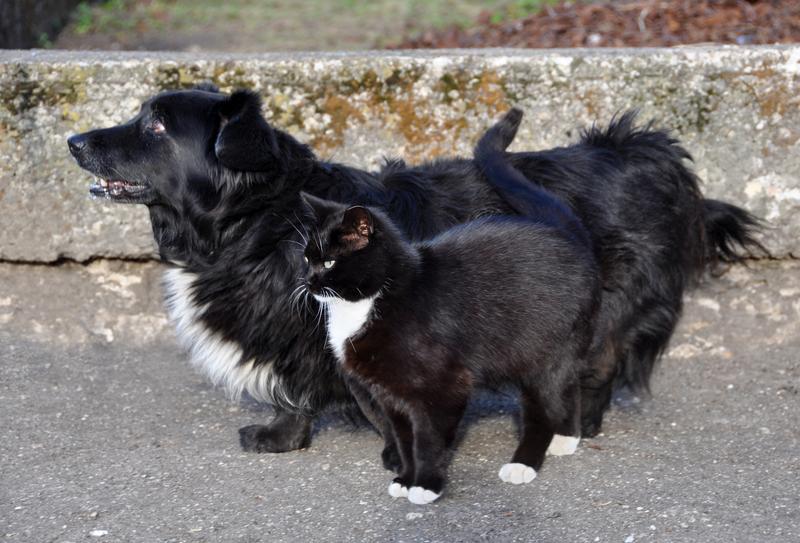 Υπεγράφη η απόφαση για τη χρηματοδότηση των δημοτικών καταφυγίων αδέσποτων ζώων