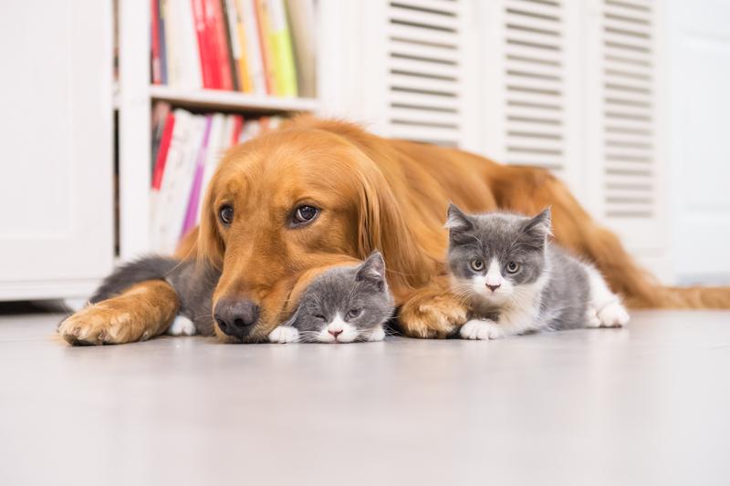 Ζώα συντροφιάς: Σε διαβούλευση το νέο νομοσχέδιο - Δημιουργία Εθνικού Μητρώου - Ηλεκτρονικό βιβλιάριο και ψηφιακό ιατρικό ιστορικό