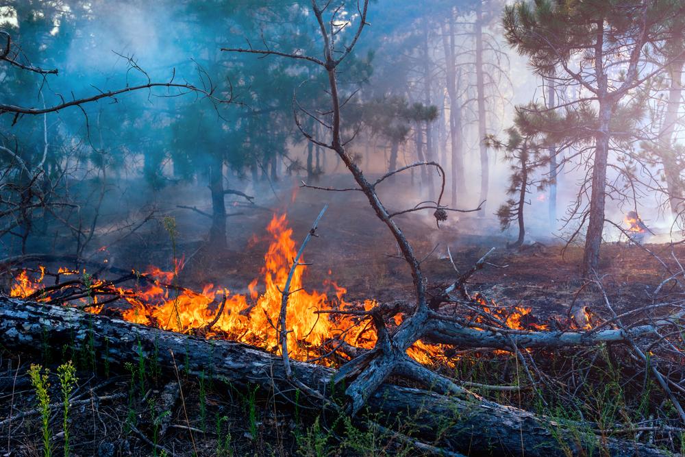 Ξεκίνησε η υλοποίηση των μέτρων για την προστασία των πολιτών και του δάσους στις περιοχές της πυρκαγιάς